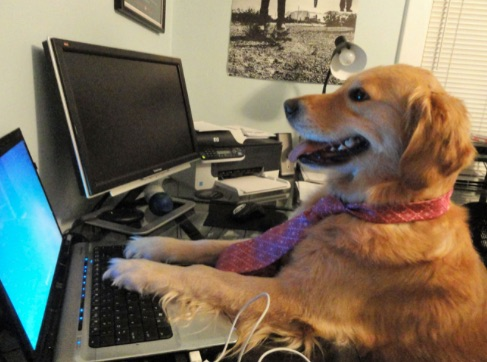 Dog wearing a tie, sitting at a computer keyboard, with a clueless but happy smile on his face